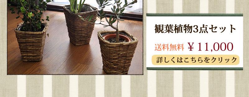 観葉植物3点セット11664