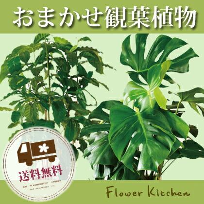 今日花 観葉植物