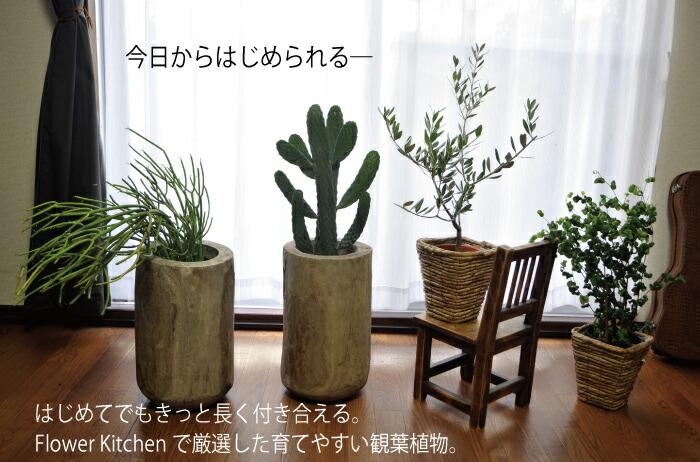 3300-kanyo05.jpg