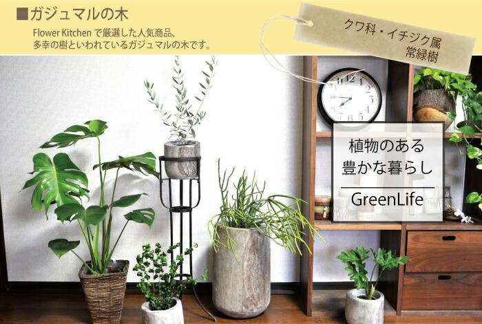 gajyu-01.jpg