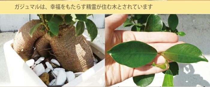 gajyu-02.jpg