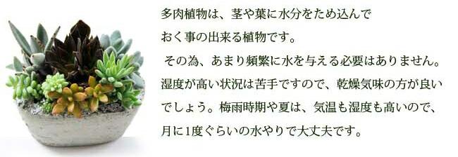 taniku07.jpg