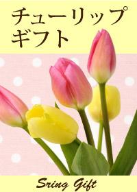春のチューリップ特集