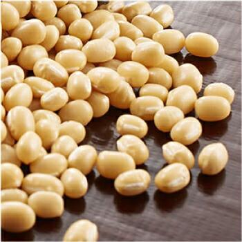 菊之寿 白小豆 金時豆