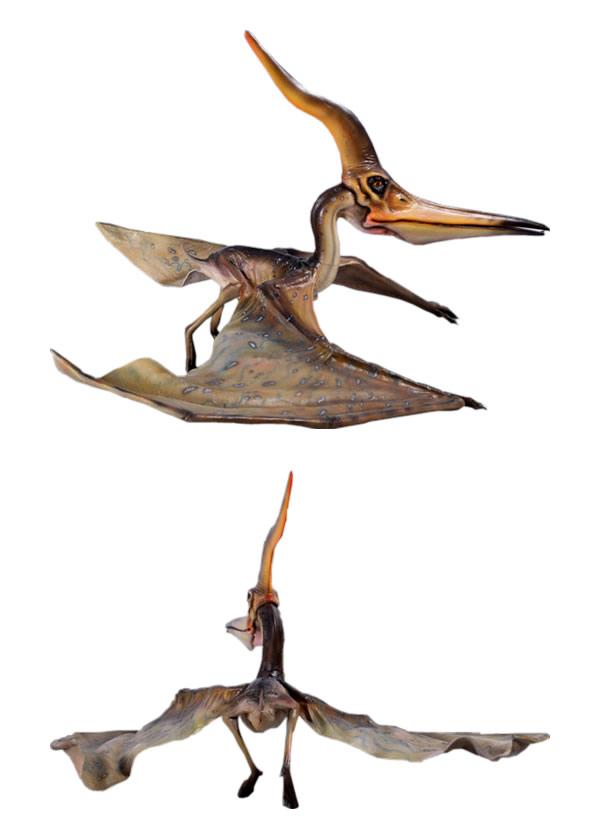 プテラノドン・144cm 標本 博物...
