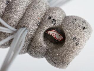 パワーベイト キング青木虫2インチ GRY グレー