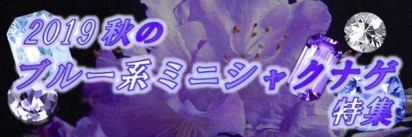 2019秋のブルー系ミニシャクナゲ特集