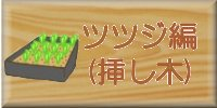 ツツジ編(挿し木)