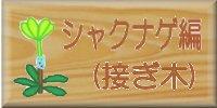 シャクナゲ編(接ぎ木)