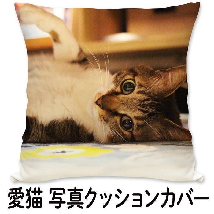 愛猫 写真クッション