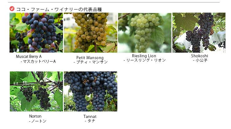 自家畑では化学肥料や除草剤は一切使わず、自家製ワインを野生酵母(天然の自生酵母)を中心に醗酵させています