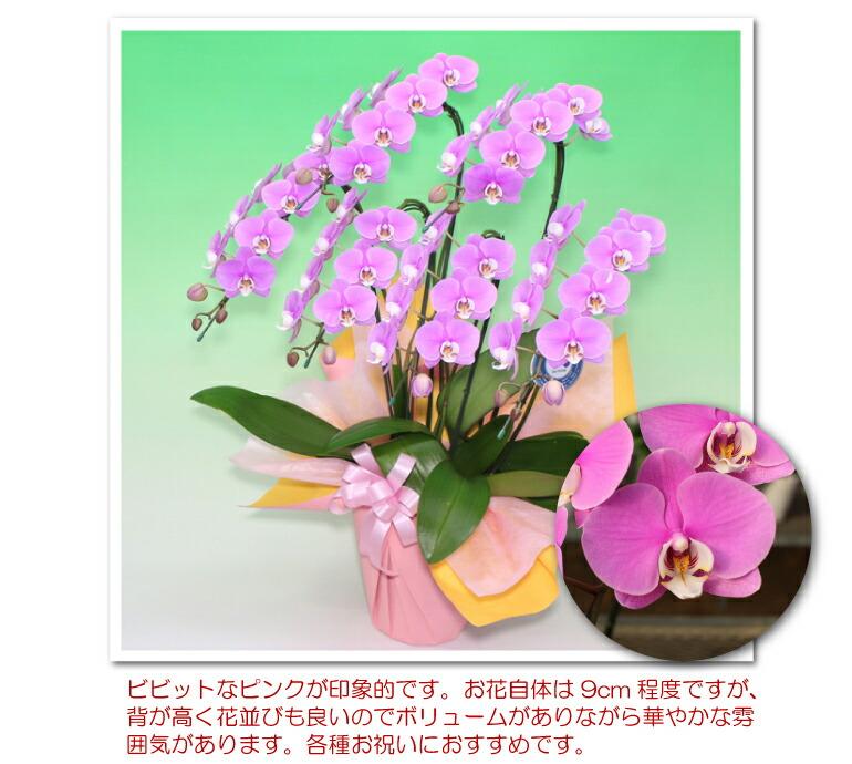 manu_angelpky5fc2.jpg