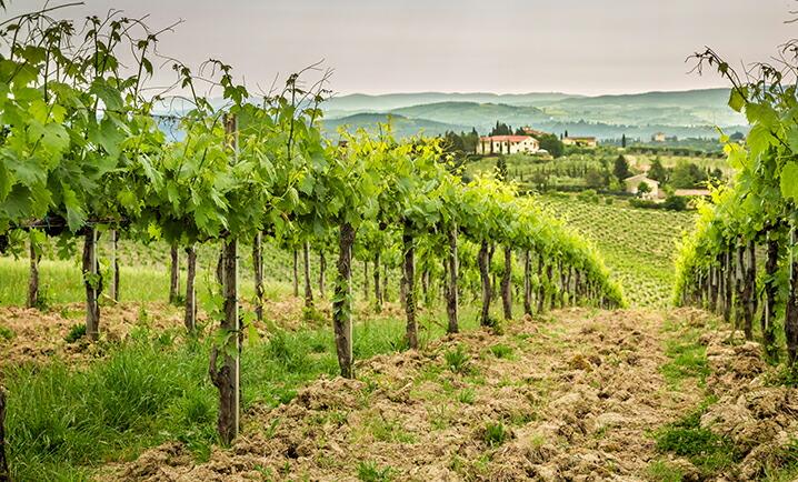 フランスワインの元のフレッシュさ