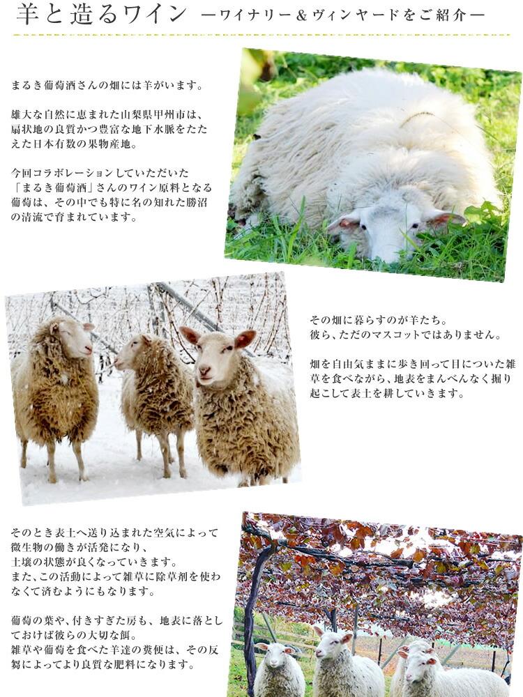 羊とつくるワイン01