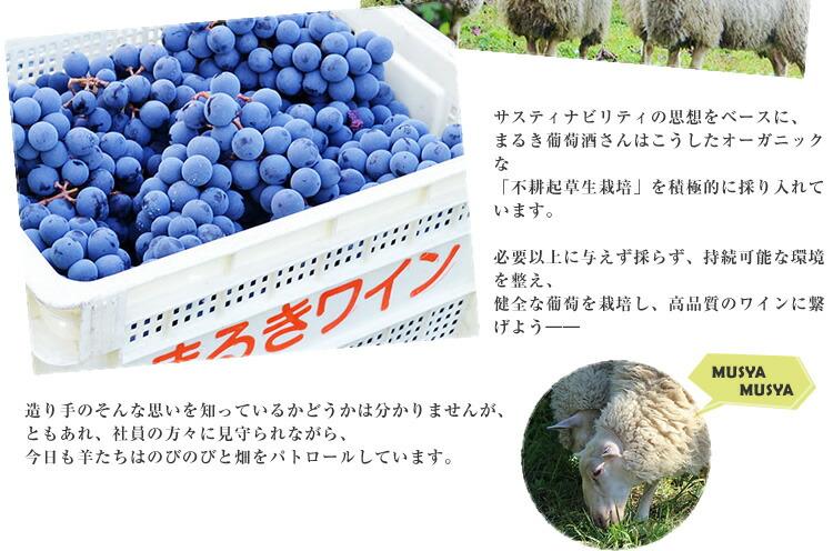 羊とつくるワイン02