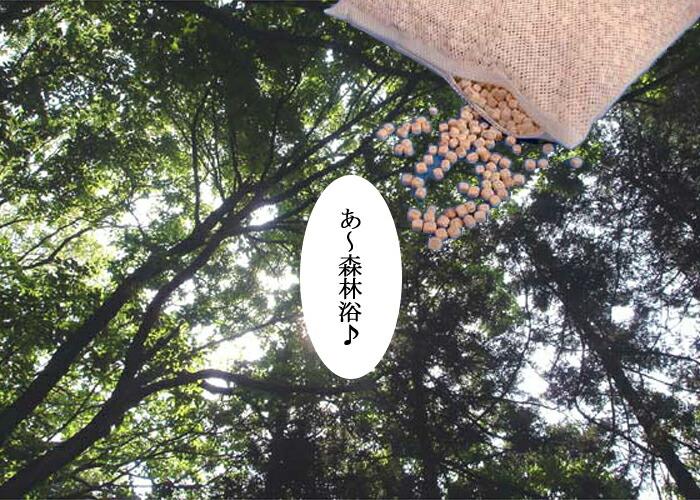 天然ひのき枕 森林浴