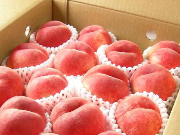 光センサー使用の糖度の高い『福島県産特秀の桃』の2.7kg箱(ご家庭向け)はこの様にして発送をいたします。