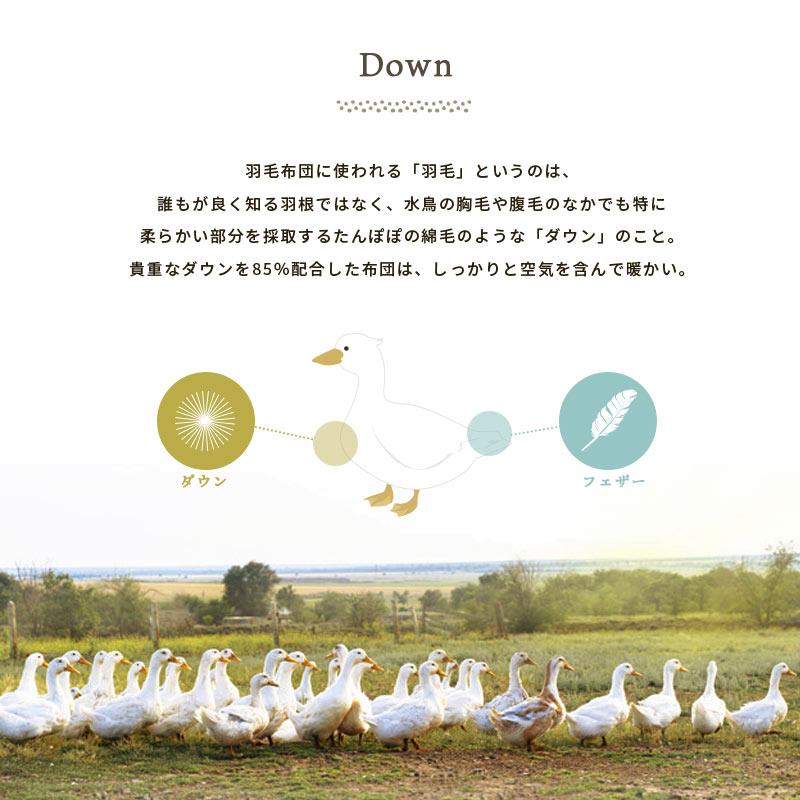 Down 羽毛布団に使われる「羽毛」というのは、誰もが良く知る羽根ではなく、水鳥の胸毛や腹毛のなかでも特に柔らかい部分を採取するたんぽぽの綿毛のような「ダウン」のこと。貴重なダウンを85%配合した布団は、しっかりと空気を含んで暖かい。 ダウン フェザー