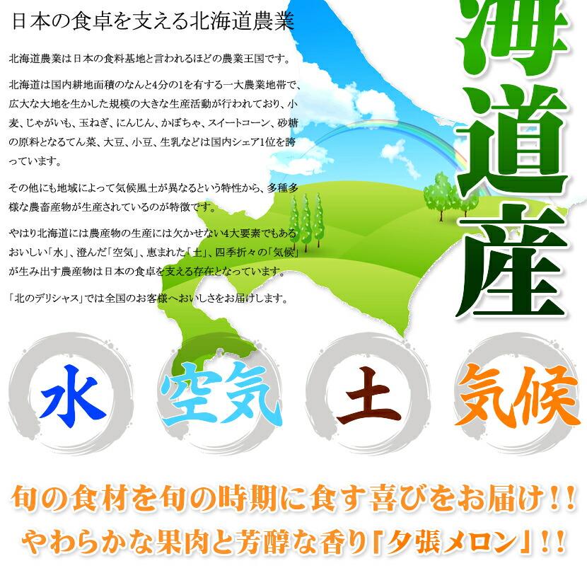 北海道産 共撰 夕張メロン