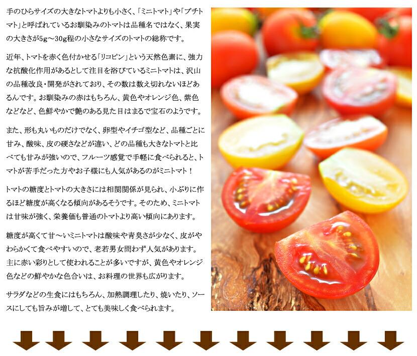 北海道産 ミニトマト ラブリー藍