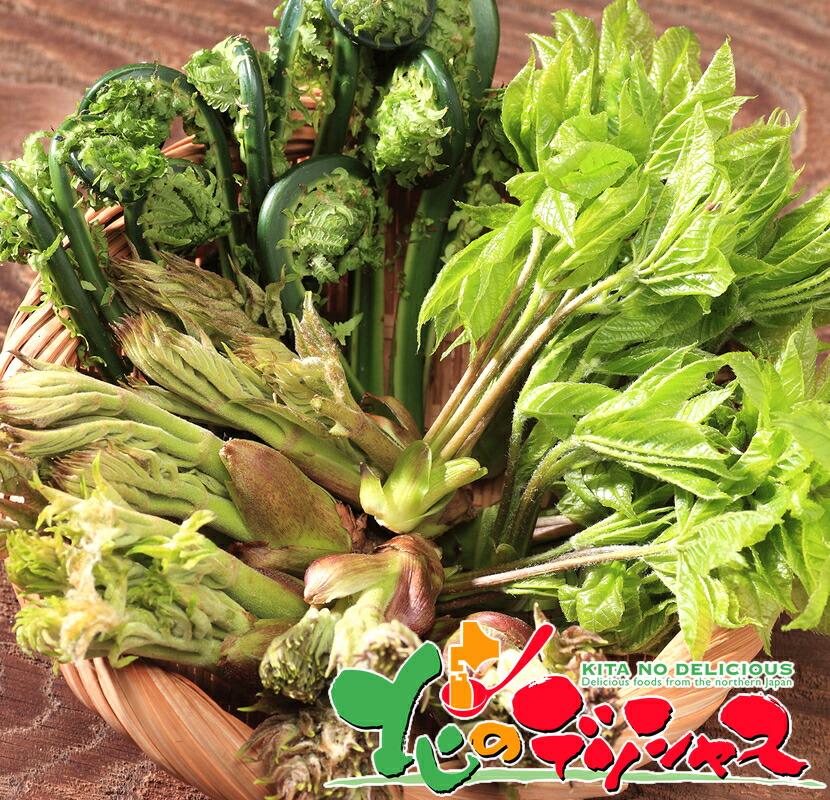 北海道 山菜 北のデリシャス