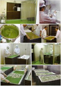 世界初の無菌養蚕システムによる子実体培養で生産!