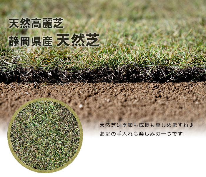 天然高麗芝:静岡県産天然芝