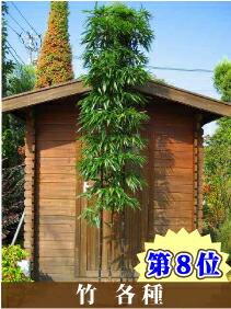 ランキング第8位 竹各種