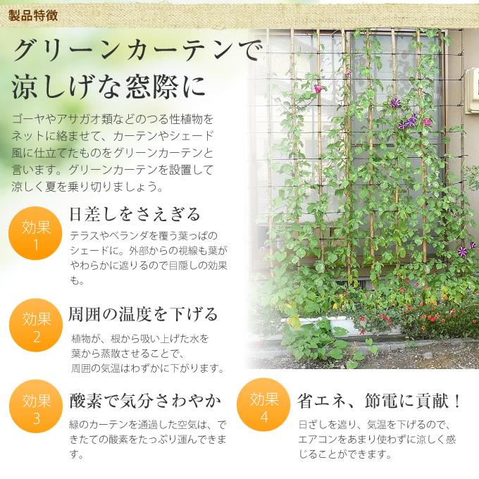 晒し竹 グリーンカーテン 300(10尺×6尺)