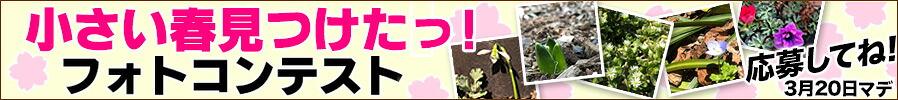 春のフォトコンテスト開催!!