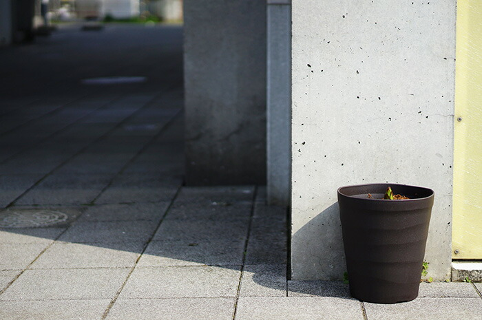 【送料無料】古屋謹製 巨大輪ユリ コンカドール 芽だし大鉢仕立て 1本立 5月下旬開花予定株
