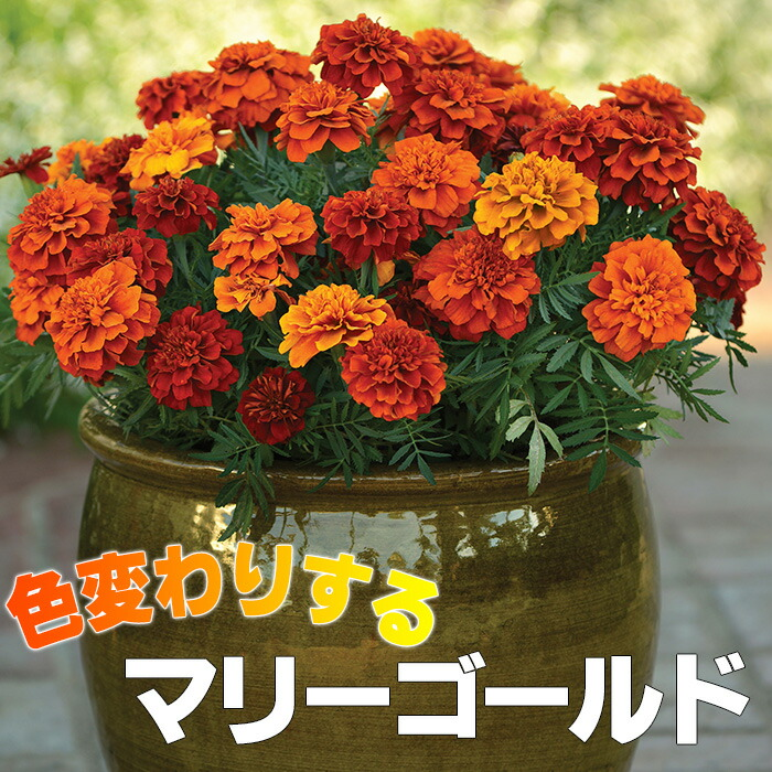 春~初夏の間に、花壇へお花を植えるけど、