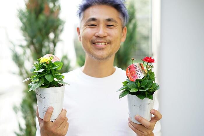 【本州送料無料】ガーデンダリア 小輪ピッコロ カラフルミックス 3寸ロングポット 12苗セット 耐暑性 耐寒性