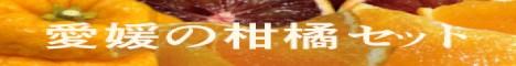 愛媛の柑橘ジェラートのセット