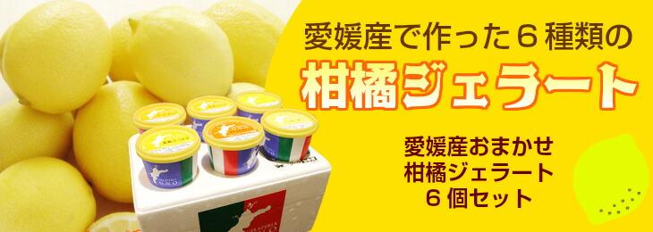 愛媛産おまかせ柑橘ジェラート6個セット