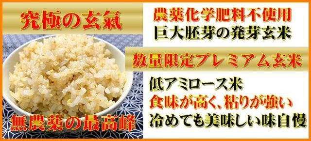 巨大胚芽米