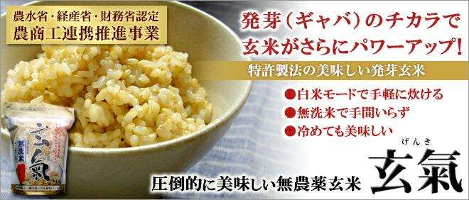 平成29年産の無農薬・玄氣(玄氣)