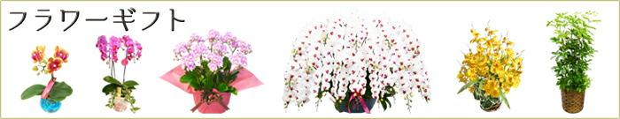 胡蝶蘭、洋蘭、観葉植物の贈り物