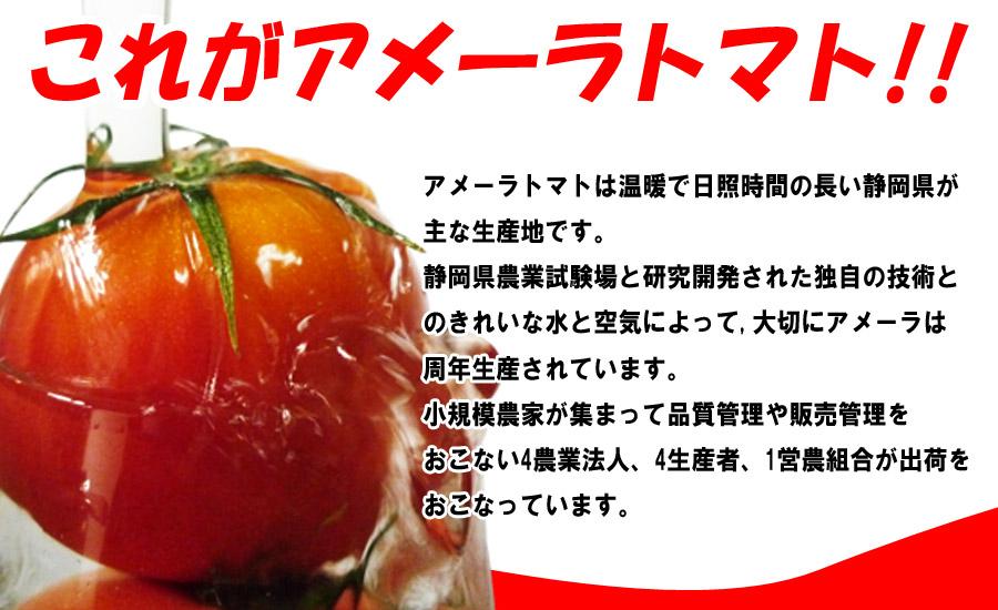 高糖度フルーツトマト アメーラ 静岡県産