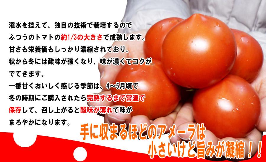 高糖度フルーツトマト アメーラ 静岡県産 甘い