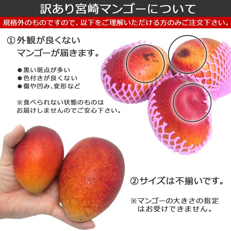 訳ありマンゴーについて