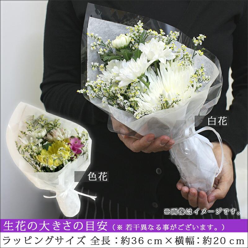 お花の説明1