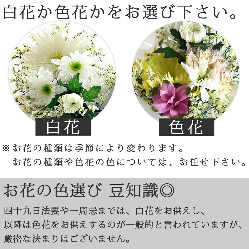 お花の説明2