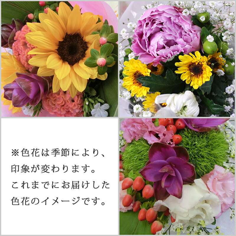 お花の説明3