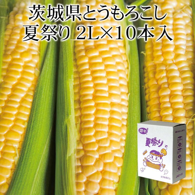 茨城県産とうもろこし 夏祭り2L×10本 縦入れ箱