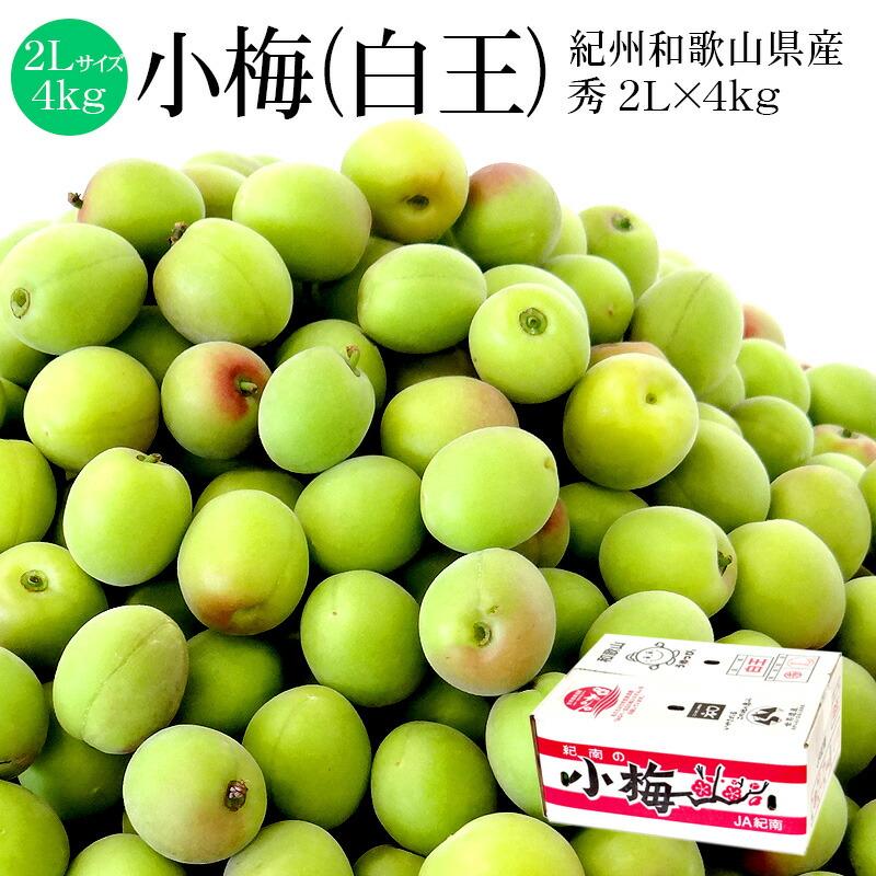 紀南の小梅(白王) 秀品 2L×約4kg