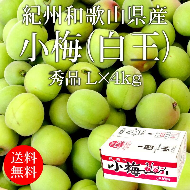 紀南の小梅(白王) 秀品 L×約4kg