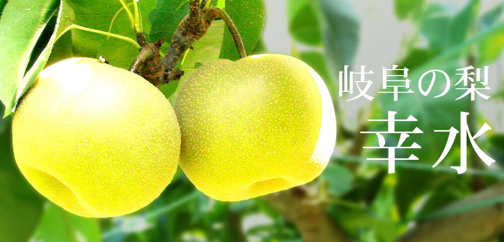 亀山農園のブランド和梨 幸水