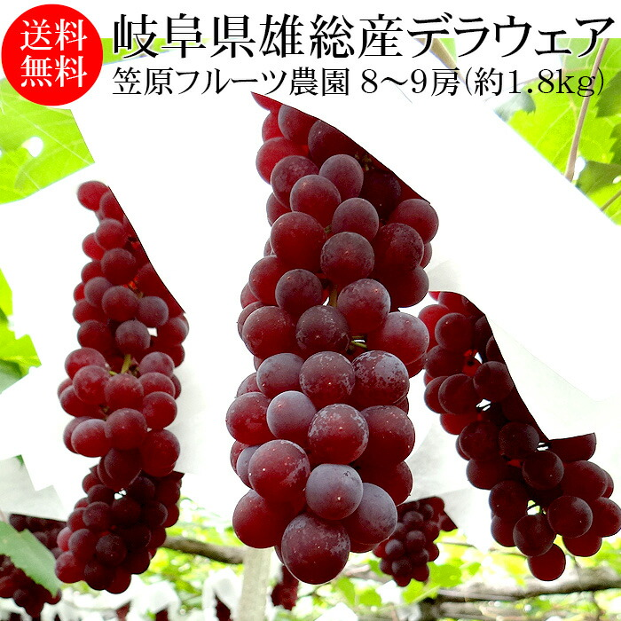 種無しデラウェア8〜9房(約1.8kg)
