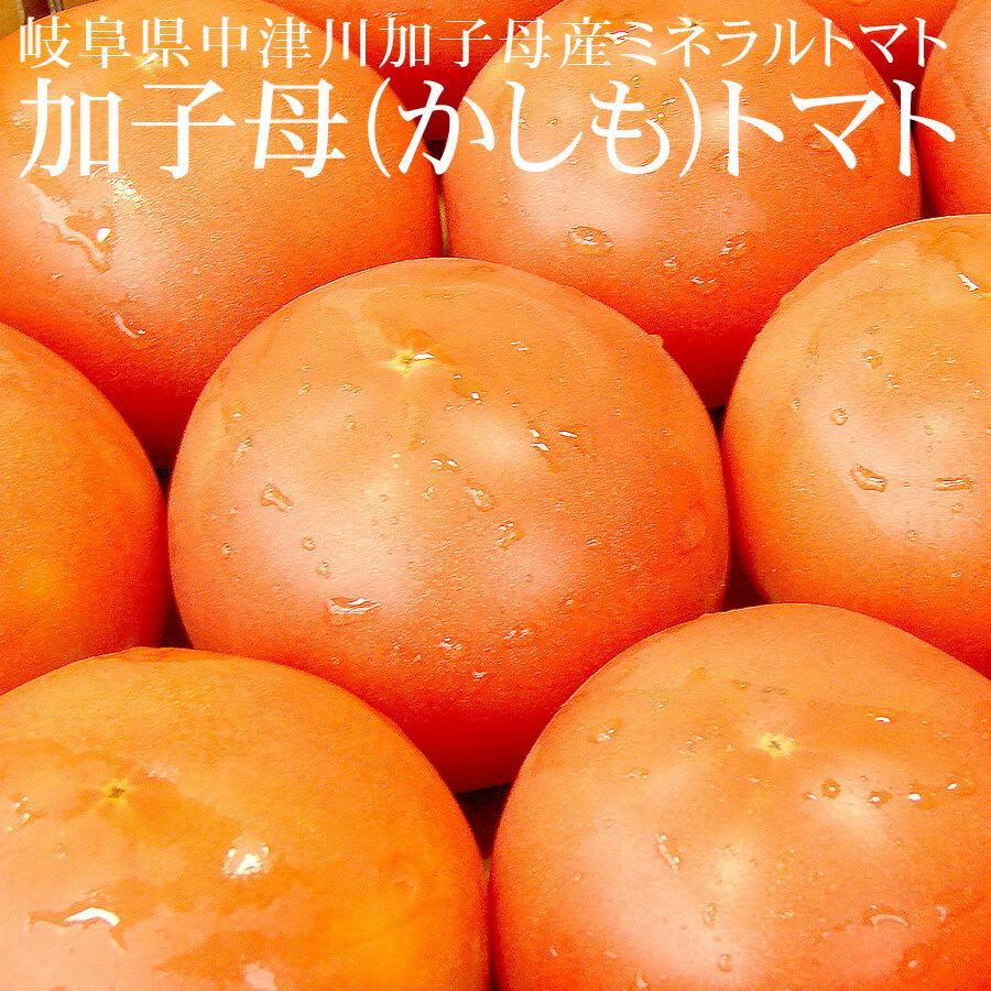 岐阜県中津川産 かしも桃太郎トマト